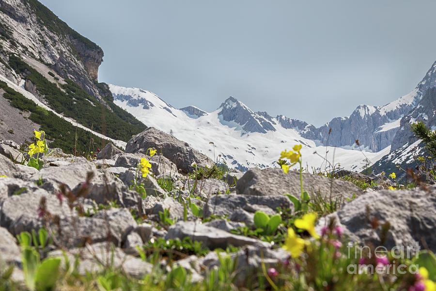 Spring in the Karwendel by Fabian Roessler