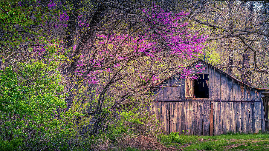 Spring in the Ozarks by Allin Sorenson