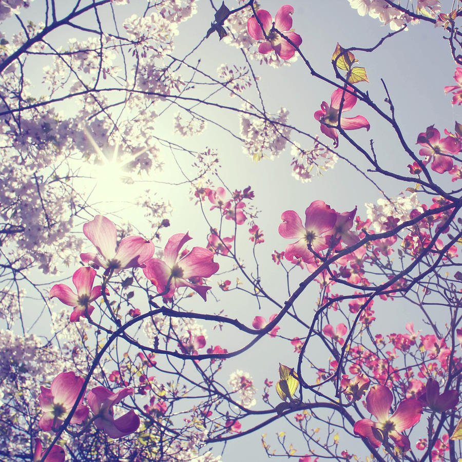 Spring Is Here Photograph by Liz Rusby