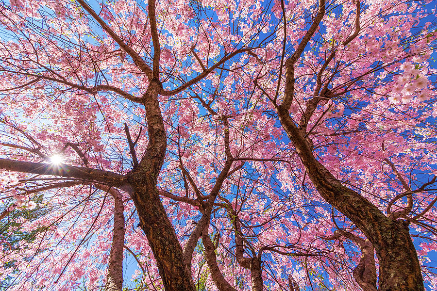 Spring Is In The Air by Allin Sorenson
