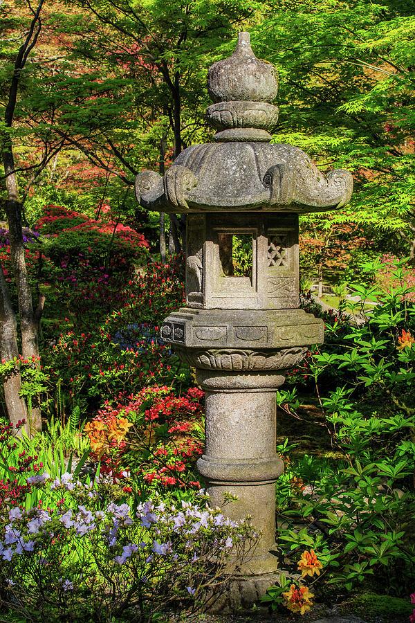 Spring Lantern by Briand Sanderson