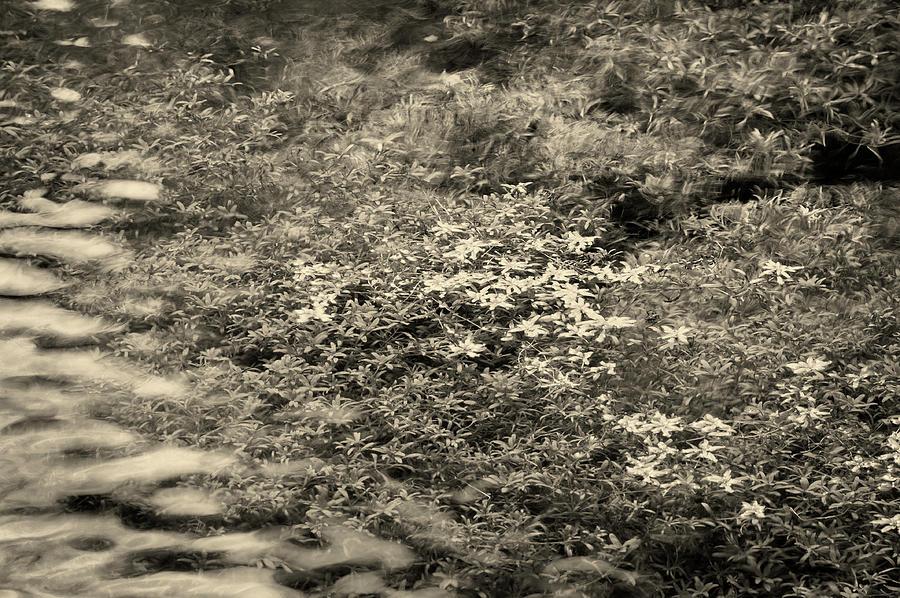 Spring Lathkill by Jerry Daniel