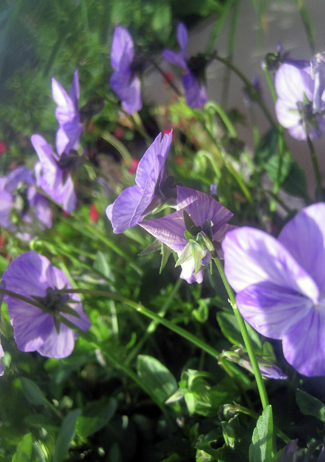 Spring Lovelies  by Jaeda DeWalt