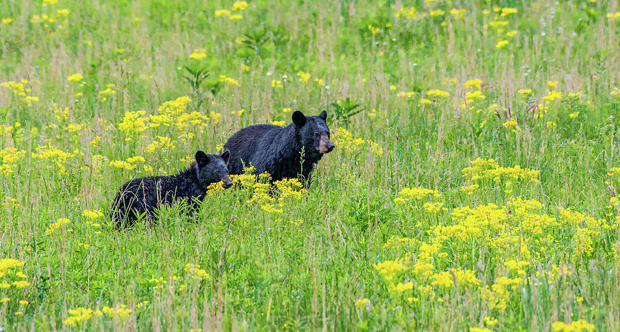 Spring Meadow in Cades Cove by Marcy Wielfaert