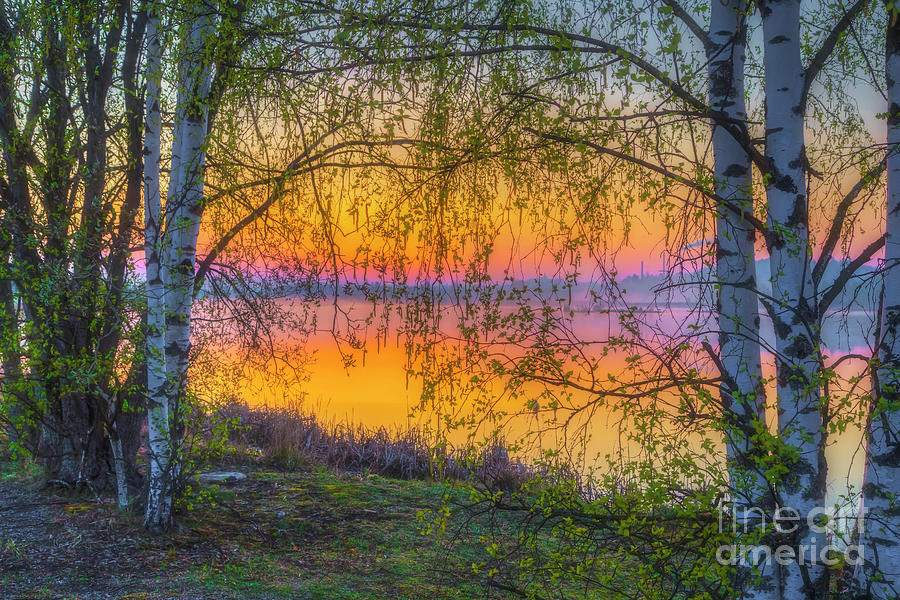 Atmosphere Photograph - Spring Morning At 5.43 by Veikko Suikkanen