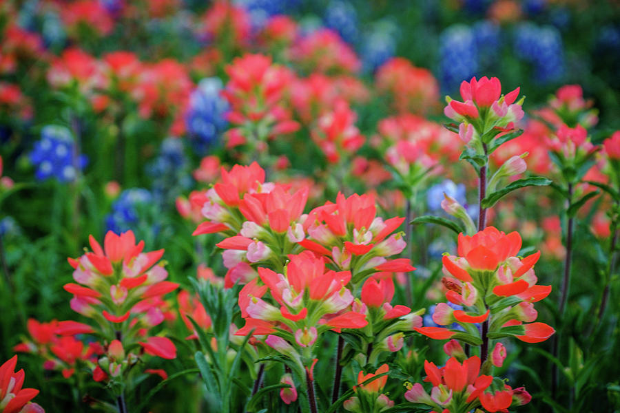Spring Paintbrush by Johnny Boyd
