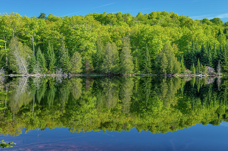 Spring Reflections by Gary McCormick
