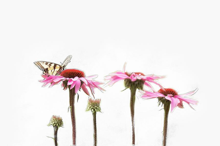 Spring sprung by Sue Collura
