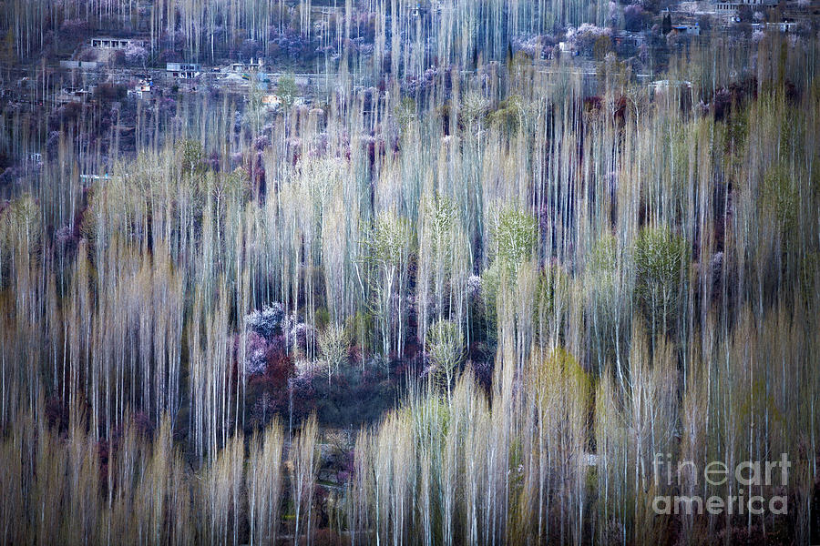 Spring strokes by Awais Yaqub