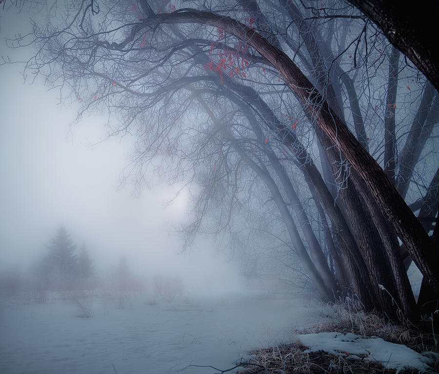 Spring Time Foggy Morning by Dan Jurak