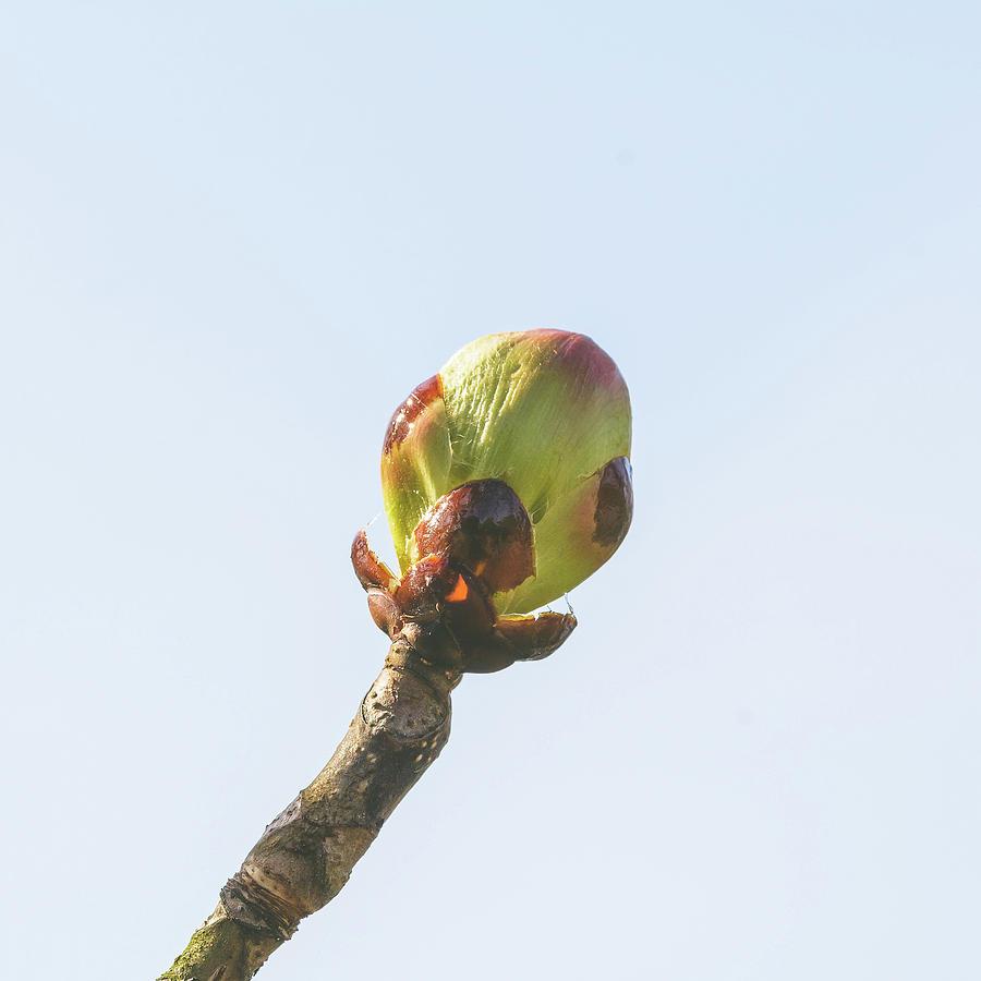 Spring Tree Buds Opening D by Jacek Wojnarowski