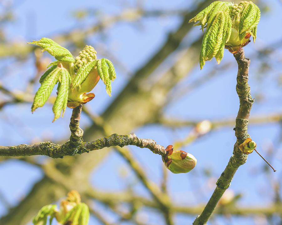 Spring Tree Buds Opening E by Jacek Wojnarowski