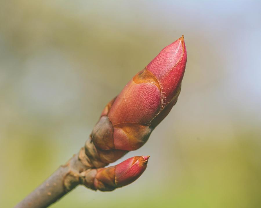 Spring Tree Buds Opening J by Jacek Wojnarowski