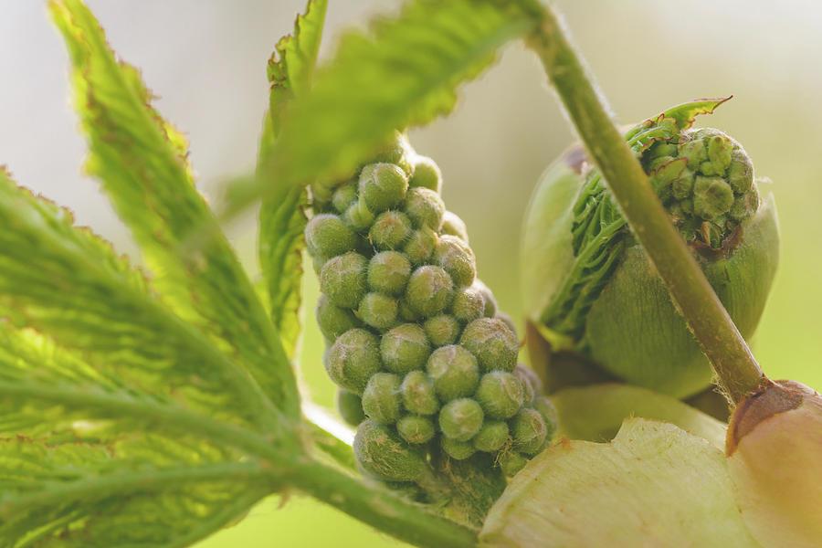 Spring Tree Buds Opening X by Jacek Wojnarowski
