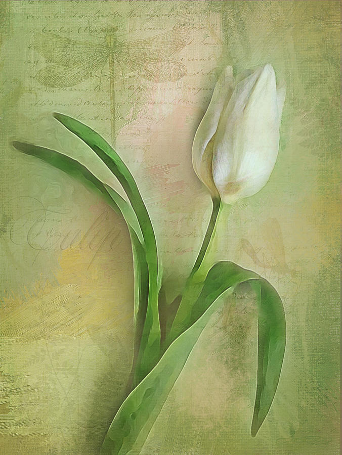 Spring Tulip Montage by Jill Love