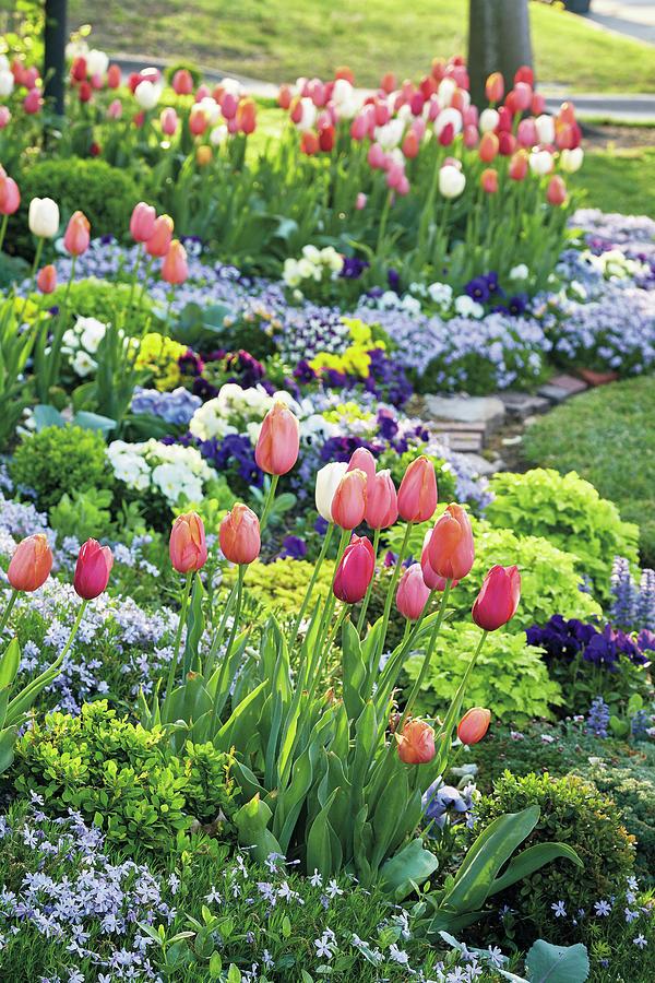 Spring Tulips by Garden Gate magazine