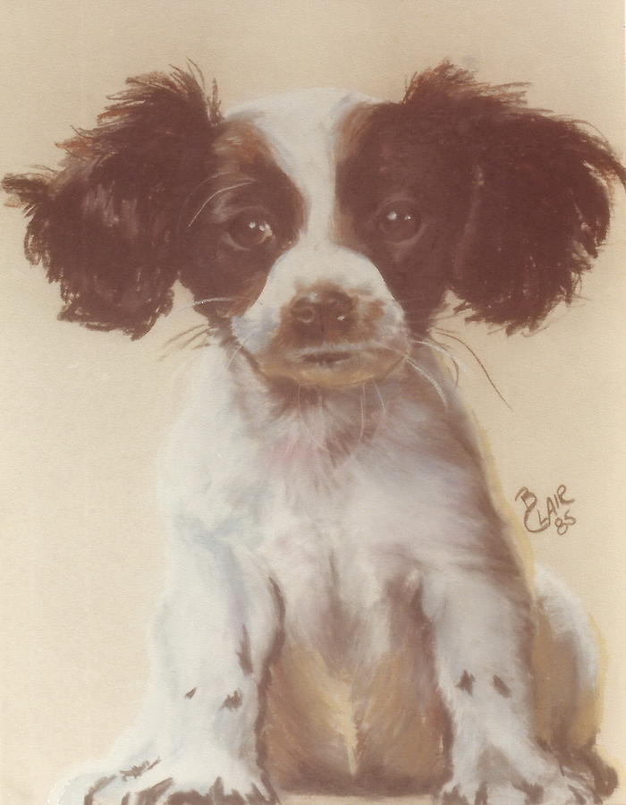 Springer Spaniel Puppy by Barbara Keith