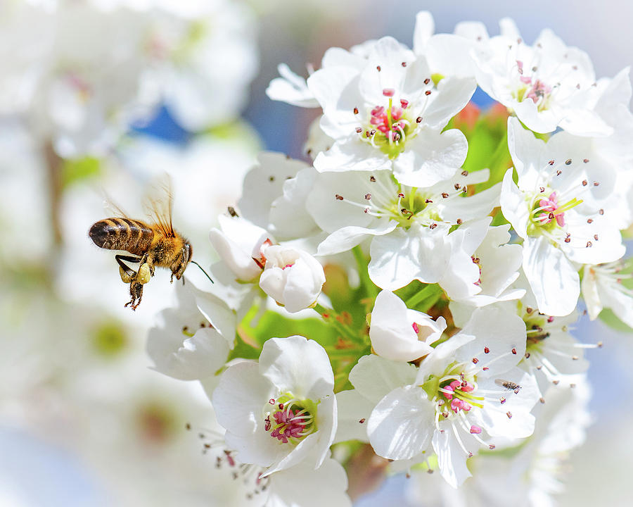 Springtime Buzz by Gary Kochel