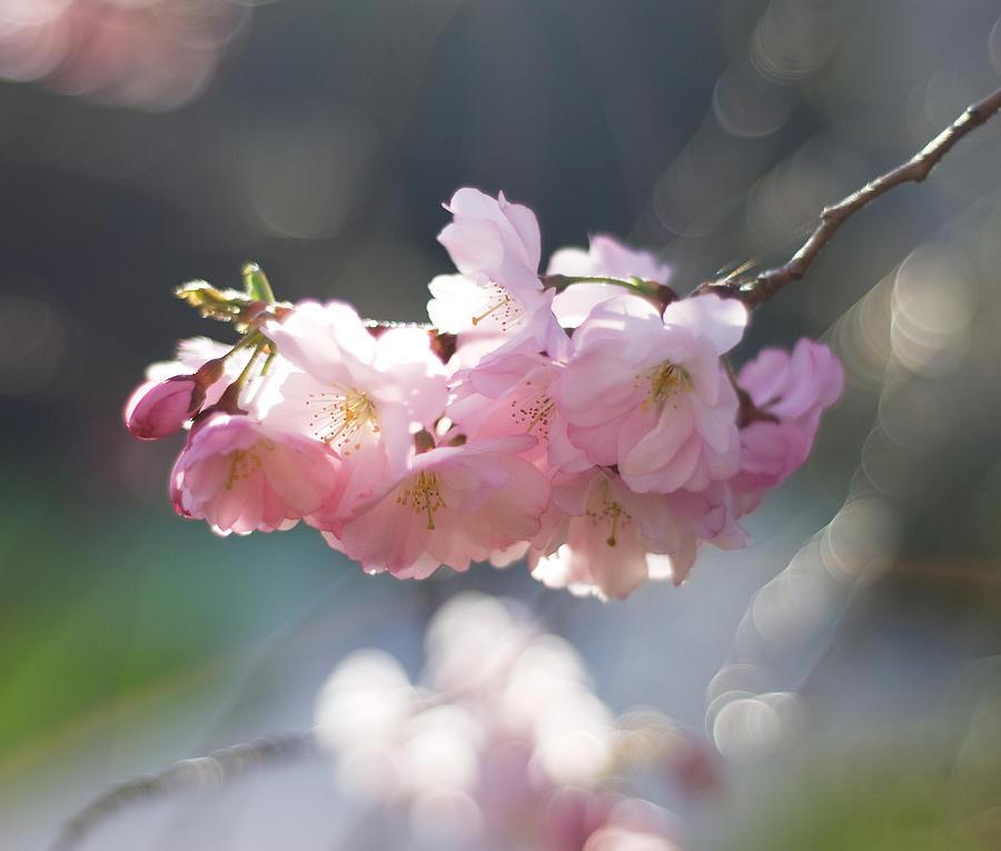 Springtime Photograph by Hgviola