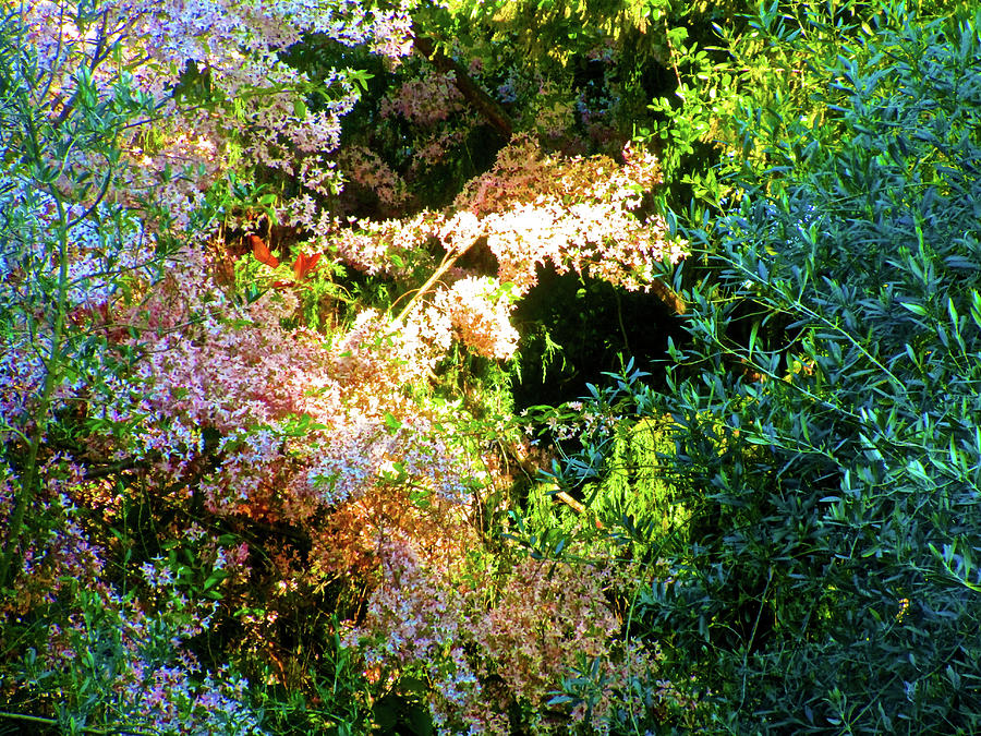 Springtime in Atherton 2017 002 by Michael Genevro