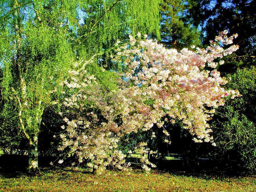 Springtime in Atherton 2017 005 by Michael Genevro