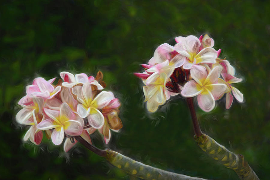 Springtime in Hawaii by Pamela Walton