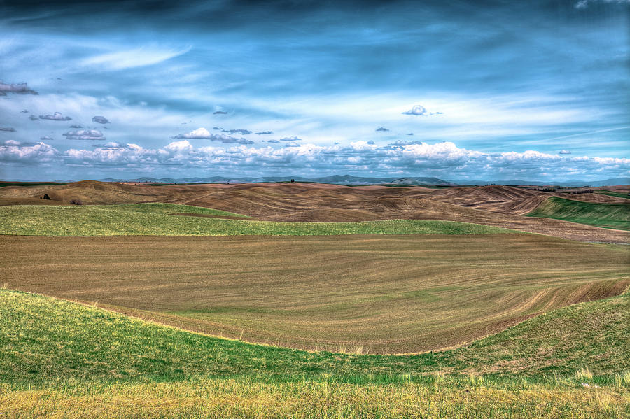 Springtime in the Palouse by David Patterson