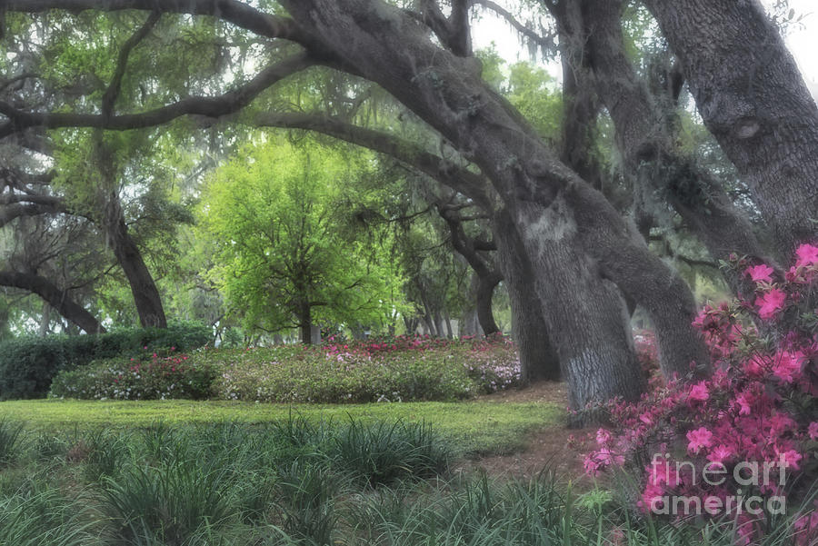 Springtime In The Park by Mary Lou Chmura