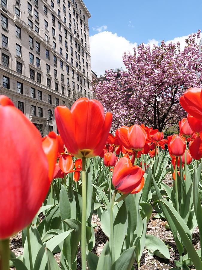 Springtime on Park Avenue by JACK RIORDAN