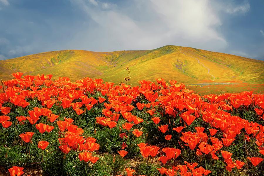 Springtime Wonders of the Superbloom by Lynn Bauer