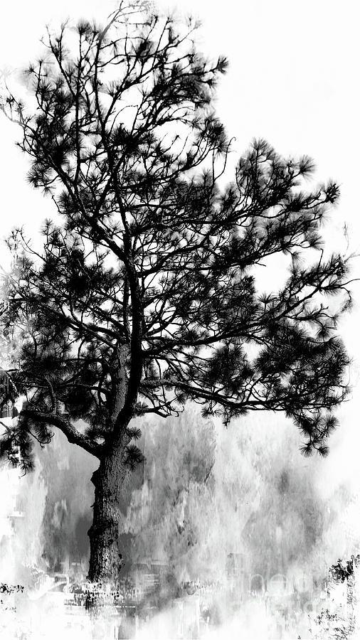 Spruce Tree by Marcia Lee Jones