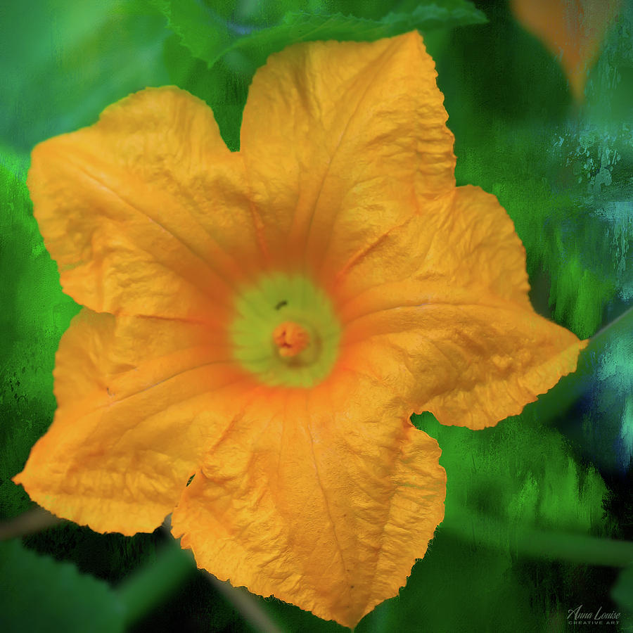 Squash Blossom by Anna Louise