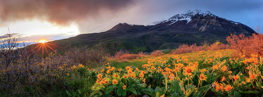 Squaw Peak Wildflower Sunstar Panorama by Johnny Adolphson
