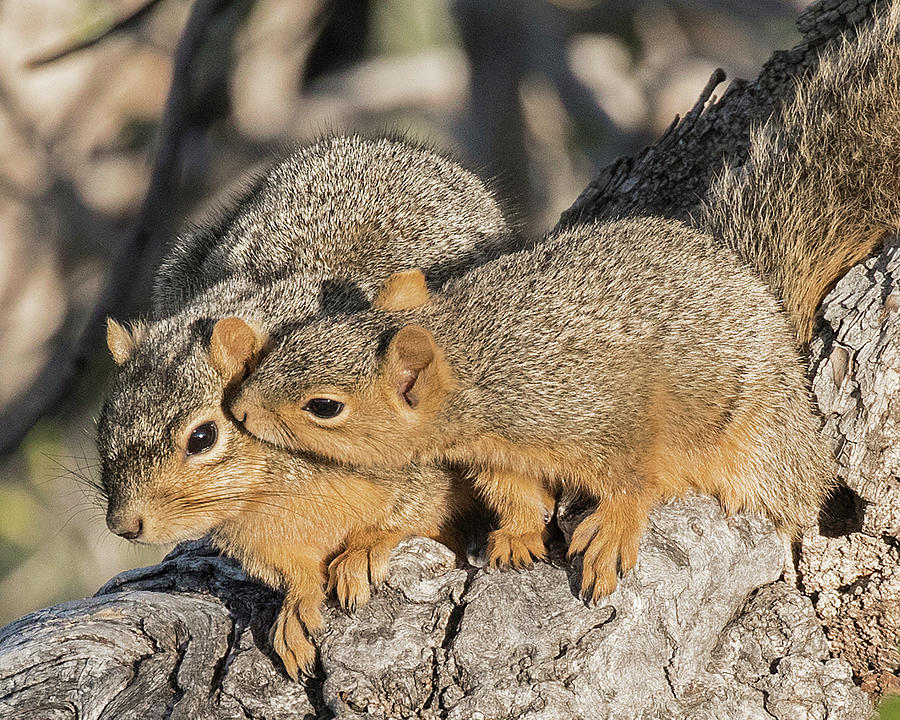 Squirrel Affection by Lowell Monke