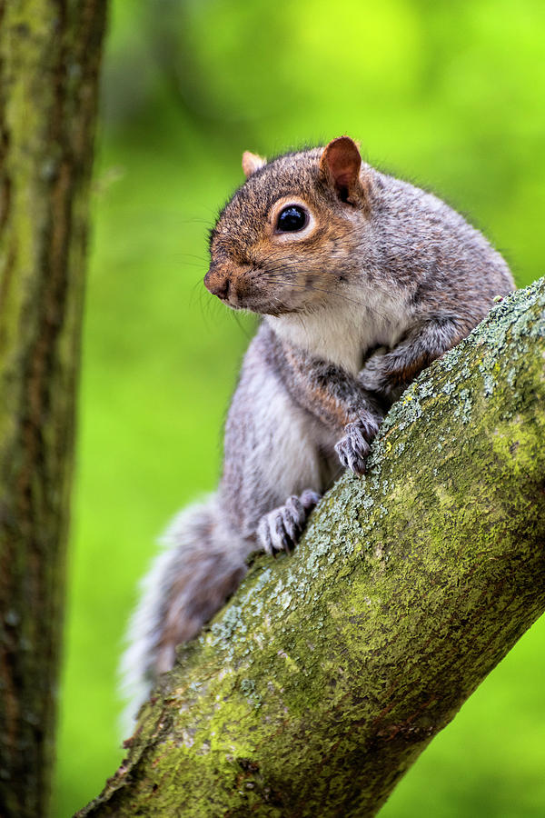 Squirrel at Greenwich Park by Pablo Lopez