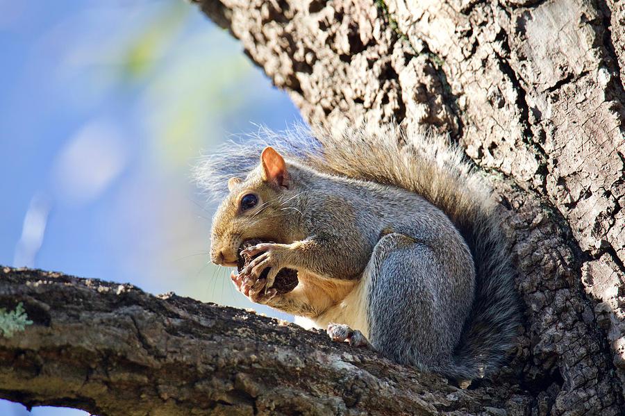 Squirrel Bites by Rachel Morrison