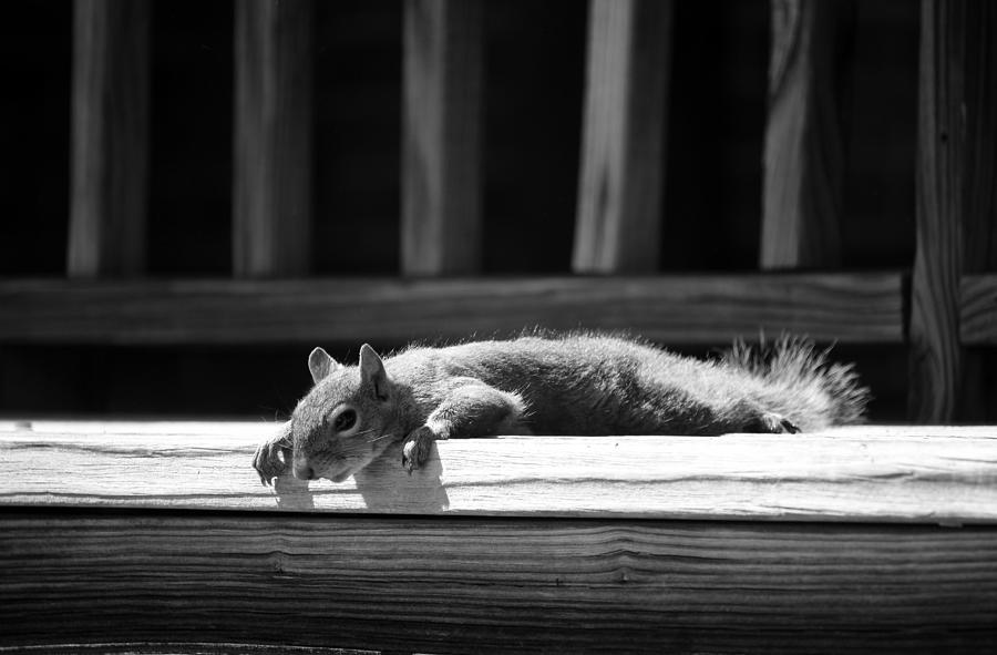 Squirrel Break by Cynthia Guinn