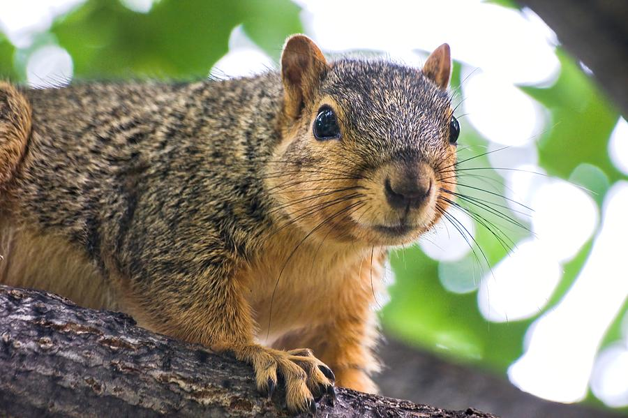 Squirrel Close Up by Don Northup