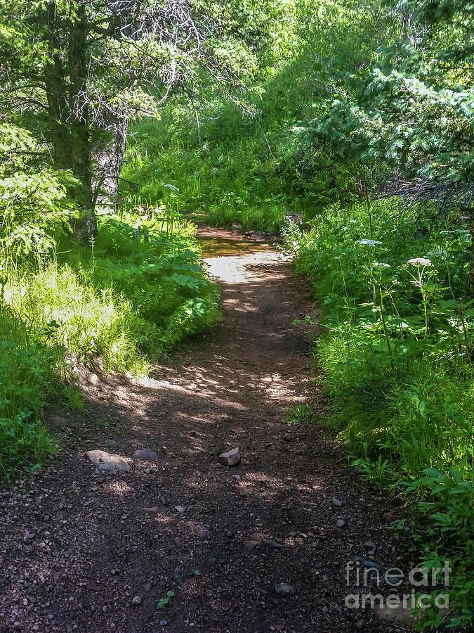 Squirrel Creek Trail by Tony Baca