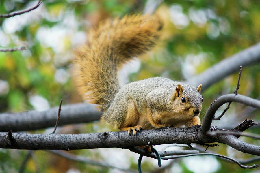 Squirrel Crouching On Tree Limb by Don Northup