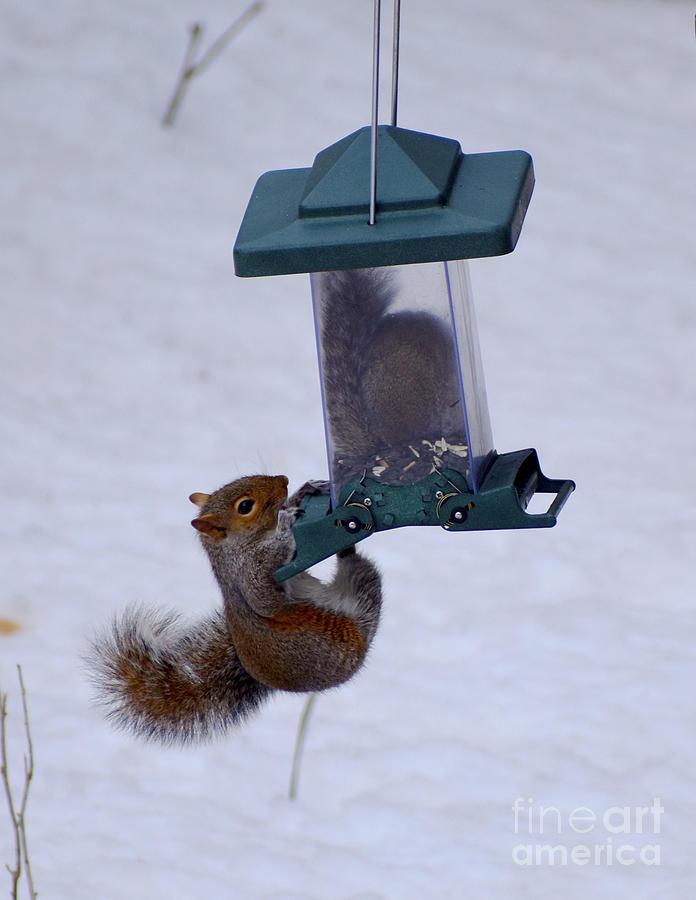 Squirrel Photograph - Squirrel Dispenser by Cheryle Gannaway