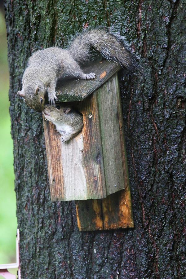 Squirrel Love by Brook Burling