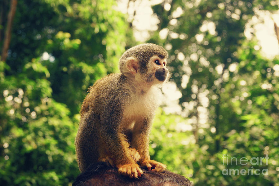 Squirrel Monkey Hat by Cassandra Buckley