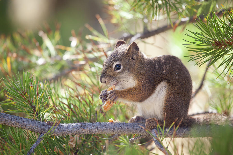 Squirrel Photograph by Nathan Blaney