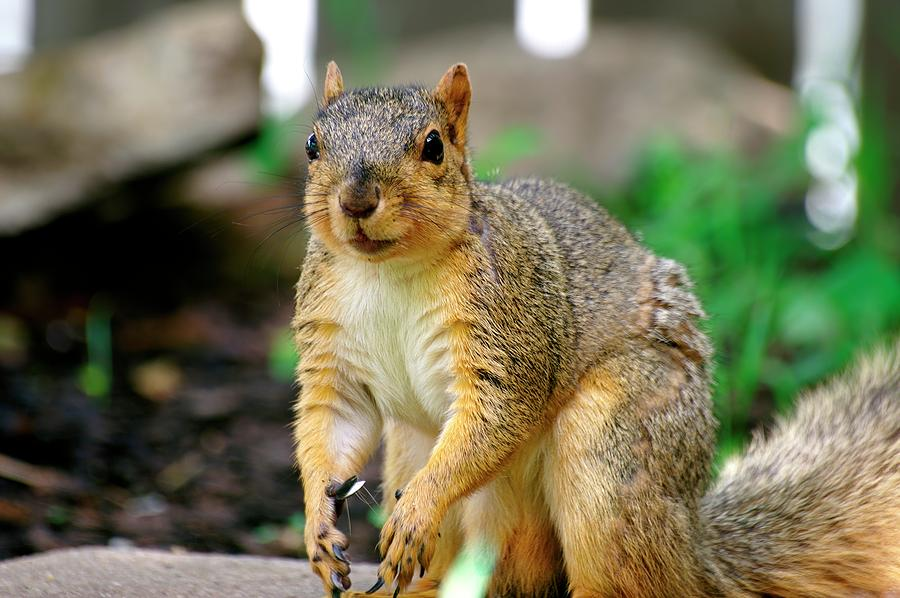 Squirrel Time by Don Northup