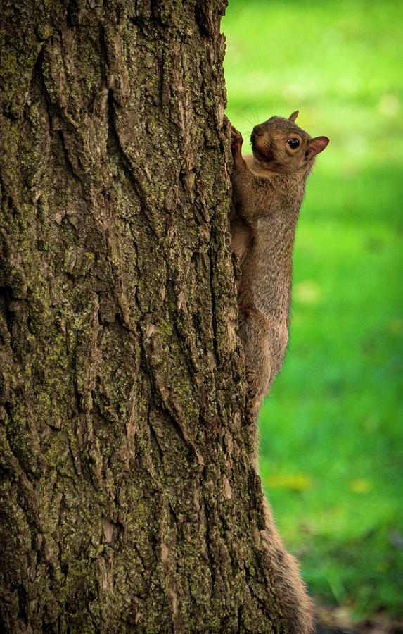 Squirrel Up a Tree by Jason Fink
