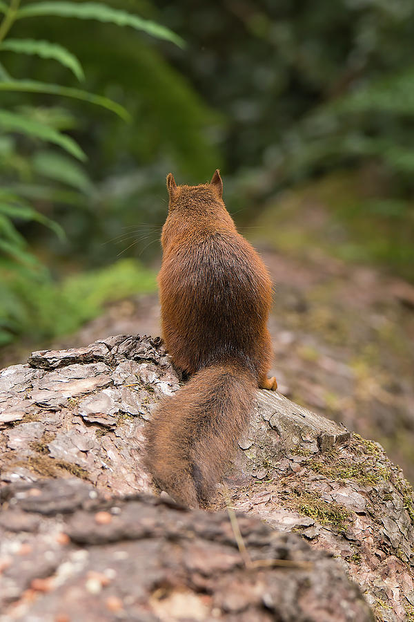Squirrel's Tale by Kuni Photography