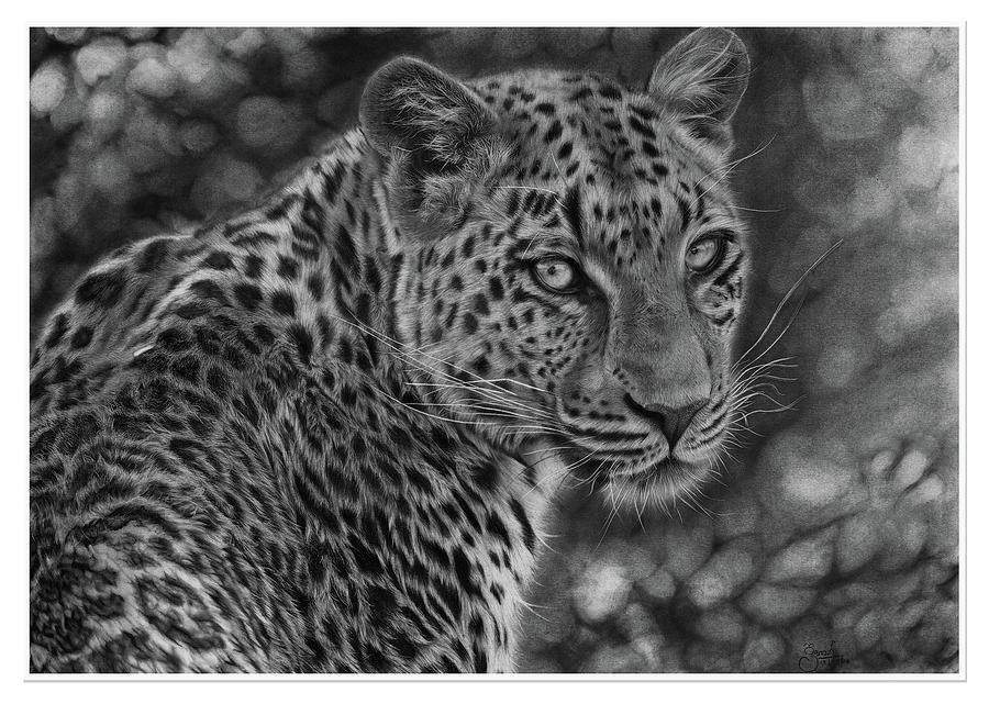 Sri Lankan Leopard Sold Hyper Realistic Pencil Drawing Drawing
