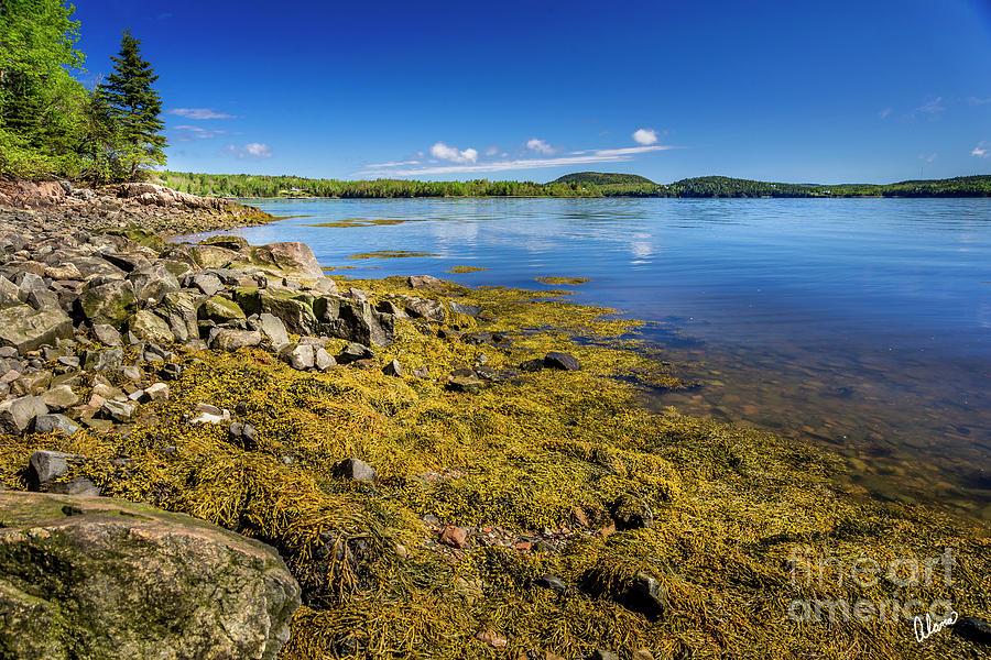 St Croix River Shoreline by Alana Ranney