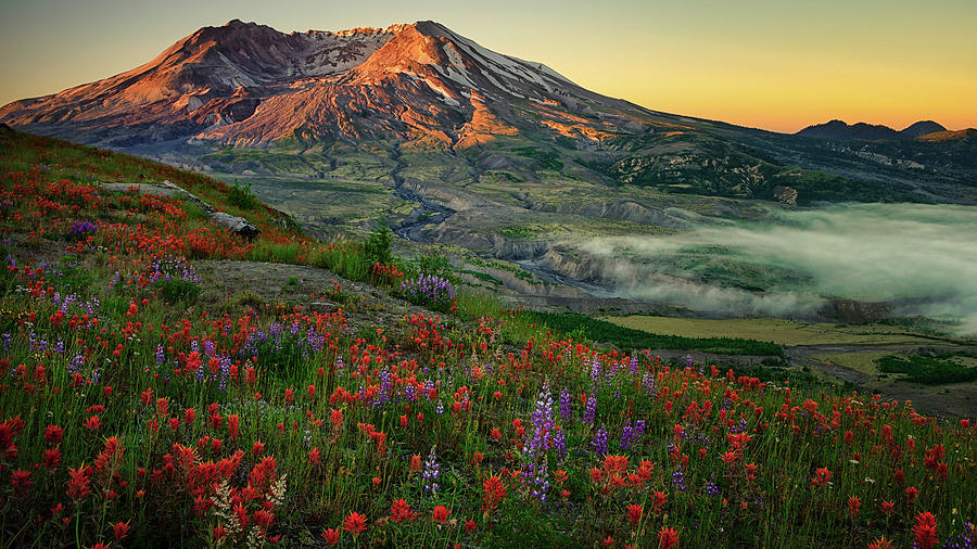 St. Helens Paintbrush by Dan Mihai